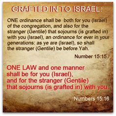 """ANYONE can be grafted into Israel!!! See Acts 11! """"You shall call no man common which I have called clean..."""""""