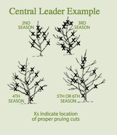 Perfect Guide for fruit tree pruning