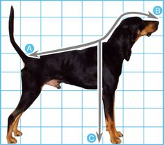 How to measure your dog for a dog treadmill