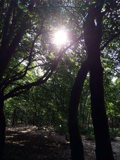 Sunshine in the Woods
