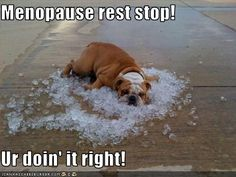 Menopause+Pictures+Funny | Cheezburger.com - All your funny in one place.
