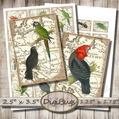 Parrots on Vintage Map, Digital Collage Sheet, Parrot Aceo Cards, Gift tags, Mini Labels, Printable Parrot Images, Instant Download a2 Parrot Image, Bird Illustration, Parrots, Collage Sheet, Digital Collage, Gift Tags, Vintage World Maps, Printable, Birds