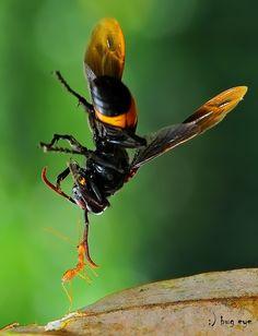 Fotografia SUPERantMAN ! de bug eye :) na 500px