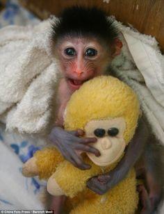 Monkey's monkey... *