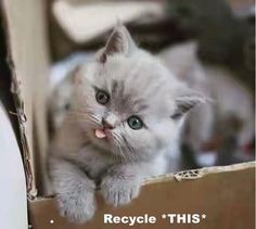 Recycle *THIS* http://cheezburger.com/9062288896