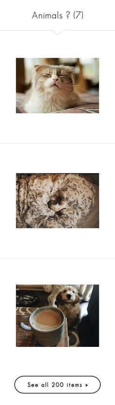 """""""Animals ♥ (7)"""" by allweknowisfalling ❤ liked on Polyvore featuring animals, photos, photo, backgrounds, pictures, instagram, pets, pics, images and white"""