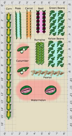 Garden Plan - Da Patch by Da Unit Red Carrot, Creamed Cucumbers, Window Plants, Garden Types, Types Of Soil, Garden Soil, Urban Farming, Garden Planning, Patches