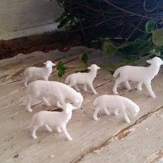 Miniature Sheep