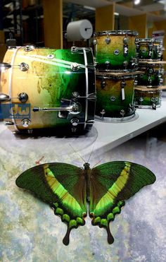 Emerald to Natural Fade over Olive Ash burl #dwdrums #thedrummerschoice
