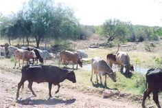 Se recuperan represos en Guaymas pero presa sigue vacía