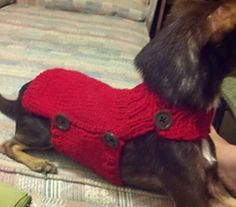 Side Button Dog Sweater pattern by Alisha Hansen acces. Side Button Dog Sweater pattern by Alisha Hansen accessories clothing Crochet Dog Sweater Free Pattern, Knitting Patterns For Dogs, Dog Coat Pattern, Knit Dog Sweater, Dog Clothes Patterns, Dog Crochet, Free Knitting, Pet Sweaters, Small Dog Sweaters