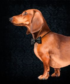 Portrait of an elegant dachshund. Art Print