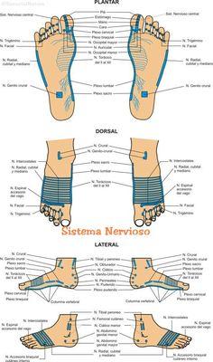 Reflexologia Podal:  Mapa del Sistema Nervioso y Algunas Técnicas del Tratamiento.