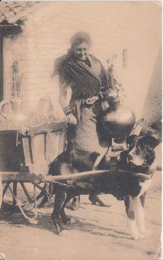 [11949 ] Dog Milk Cart postcard serie 38 no 15 Bruxelles