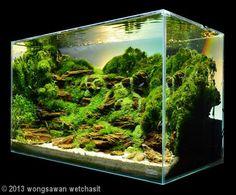2013 AGA Aquascaping Contest - Entry #170