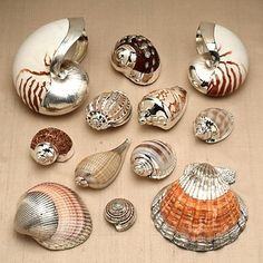 Shells dipped in silver