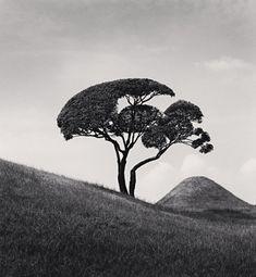 Michael Kenna - Tree and Mountain, Suizenji Joju-en Garden, Kumamoto, Kyushu, Japan, 2002