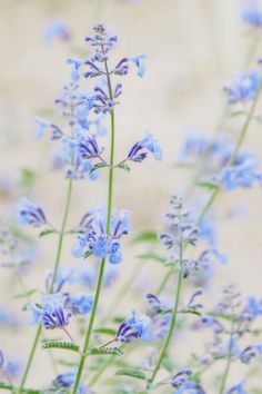 Blue Small Flowers Mobile Wallpaper - Mobiles Wall