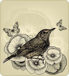Fond Avec Des Fleurs De Pavot Et Oiseau Grive Litorne  Dessin à La Main  Vector Illustration  Banque D Images  Vecteurs et Illustrations Libres de Droits