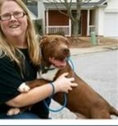 9 Month Old Buster Brown loves CATS!! is an adoptable Pit Bull Terrier Dog in Rowayton, CT. 7 months old Neutered Current on vaccines Microchipped  ... ...