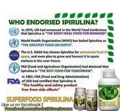 The United Nations World Food Conference of 1974 lauded Spirulina as possibly the best food for the future. Az ENSZ 1974-es Élelmezési Világkonferenciája a Spirulint a jövő legjobb élelmezésére elismerte. A Spirulina úgy ismert, mint ami csökkenti az édességek iránti vágyakozást. Ezenfelül étvágycsökkentő hatása úgy érvényesül, ha az étkezések előtt legalább fél órával fogyasztjuk. Amikor erősítő kúra a cél a spirulina fogyasztását étkezések közben, vagy közvetlen utána tegyük meg! Spirulina, Superfood, Great Recipes, Good Things, Health, Health Care, Salud