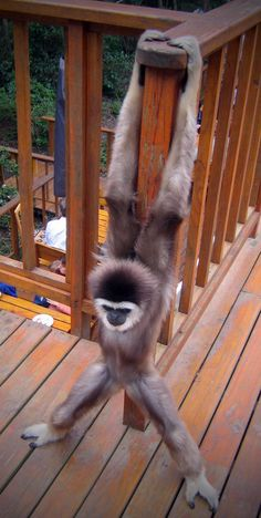 One for @SansSouciCrea , one cool monkey.