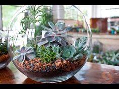 Terrario com Plantas [Mini Mundo] Materiais - Recipiente (vidro, cerâmica, barro, tênis, panela... use a criatividade) - Substrato preparado, nesta proporção...