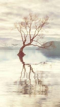Lake Shore Tree http://theiphonewalls.com/lake-shore-tree/
