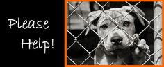 IF YOU WANT TO ADOPT OR FOSTER A #NYC DEATHROW DOG PLS SEND AN EMAIL TO help@urgentpetsondeathrow.org ! !SAVE A LIFE!