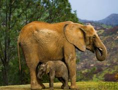 @Andres  your 1st favorite animal.  See the baby elephant likes to cuddle just like you <3 with your mamá.