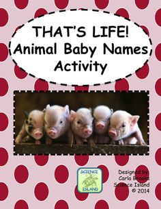 What's more adorable than animal babies? That's right, NOTHING! This activity is perfect for creating End-of-the-Year smiles! Students will improve their animal vocabulary by matching animal names and pictures with the baby names. Two worksheets are also included to reinforce the vocabulary. Did you know that a baby platypus is a puggle? Awwww. This product is educational fun at it's cutest!