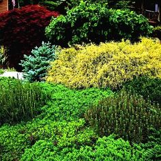Green_Assorted Greenery With Red and Yellow Foilage Staggered At Different Heights Green Flowers, Green Leaves, Perennial Ground Cover, Silver Plant, Concrete Bird Bath, Blue Spruce, Garden Projects, Garden Ideas, New Green