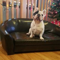🎶On the third day of cuteness the Pet Squad gave to me, 🎶 Who needs hens when you have this little cutie? Love Your Pet, Your Dog, Dog Bed, Doggie Beds, Outdoor Dog, Baby Dogs, Dog Houses, Dog Accessories, Dog Care