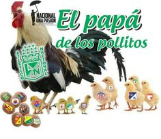 El papa de los pollitos Rooster, Christmas Ornaments, Holiday Decor, Animals, Chicken, Animales, Animaux, Christmas Jewelry, Animal