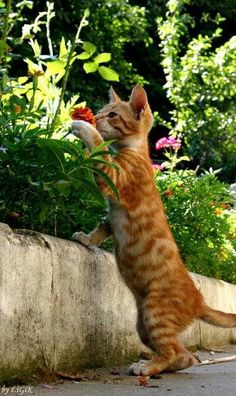 Me likes to smell the flowers...