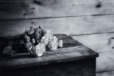 Davide Solurghi Photography - Recent Work - Indissoluble love | Thank you so much for the visits, favs and comments :)  ©Davide Solurghi All Rights Reserved #stilllife #indoor #inside #studio #Flowers #wood #table #wooden #furniture #earthenware #nature_morte #natura_morta #roses #fiori #love #bnw #Indissoluble