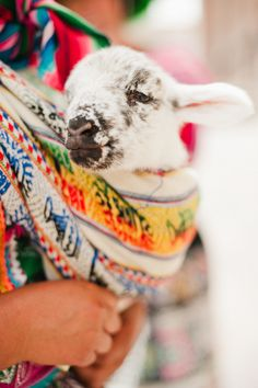 #peru, #travel-guide, #lamb  Photography: Merari Photography - merari.com  Read More: http://www.stylemepretty.com/living/2013/06/06/peru-with-merari-teruel/