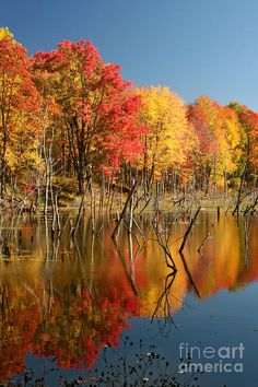Autumn Trees at Moraine State Park-- photo: Doris Dumrauf Scenery Pictures, Fall Pictures, Fall Photos, Nature Pictures, Autumn Scenery, Autumn Trees, Beautiful World, Beautiful Places, Nature Scenes