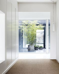 Villa Wienberg / Friis & Moltke  + Wienberg Architects Cabinet D Architecture, Interior Architecture, Interior Design, Architecture Wallpaper, Residential Architecture, Aarhus, Bamboo In Pots, Potted Bamboo, White Hallway