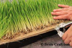 Make a Wheatgrass Centerpiece!