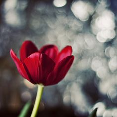 """Curses. Foiled Again."" by Brad Sloan #photography #bokeh #flower #flickr"
