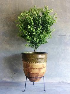 Glazed Dagar with stand ©Garden Life Garden Planters, Planter Pots, Office Plants, Olive Tree, Glaze, House Styles, Green, Garden Ideas, Baskets
