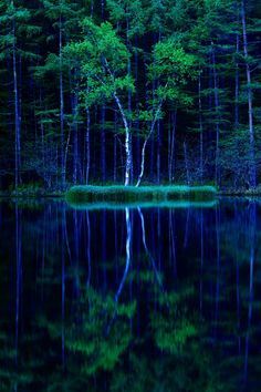 "evocativesynthesis: ""  Mishaka Pond, Nagano, Japan (via GANREF) """