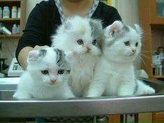 Kittens, Cats, Cute Kittens, Gatos, Kitty Cats, Baby Cats, Cat, Kitty, Kitten
