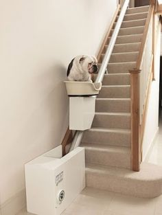 The world's first stairs lift for dogs