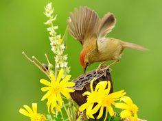 عکس های دیدنی از دنیای پرندگان | اطلاعات جامع و مفید از وب سایت ...