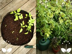 What Are Smart Pots? Smart Pots Are Fabric Containers For Urban And Small  Space Gardening.