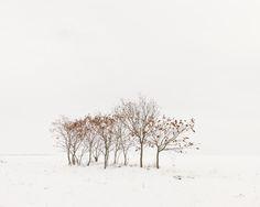 akosmajor: Road 6 trees   Dunaföldvár, Hungary 2013