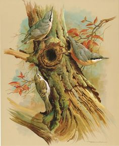 The Tree Creeper & The Nuthatch - Vintage 1965 Bird Print by Basil Ede