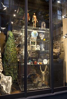 The Evolution Store. 120 Spring Street  Soho NYC  Hope to see you soon!